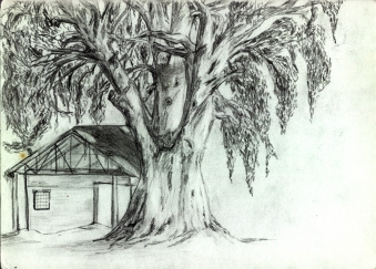 house under a tree