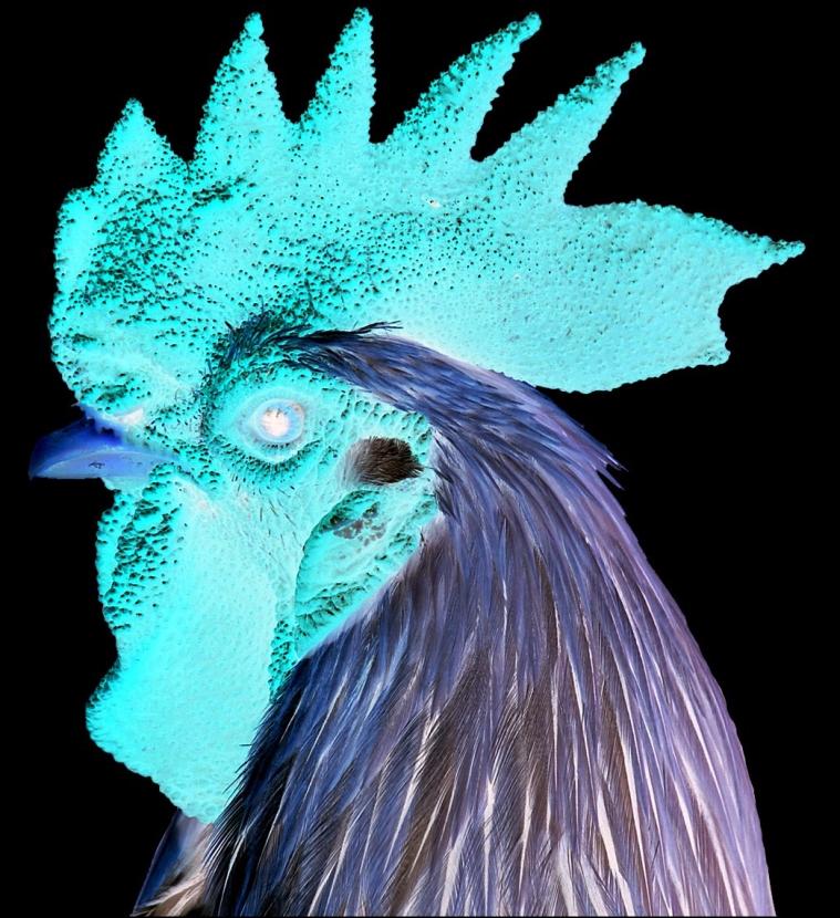 COMBFORAFTERIMAGE  פרופיל פוטנציאלי לסמיילי או.. להרגיש את התרנגולת